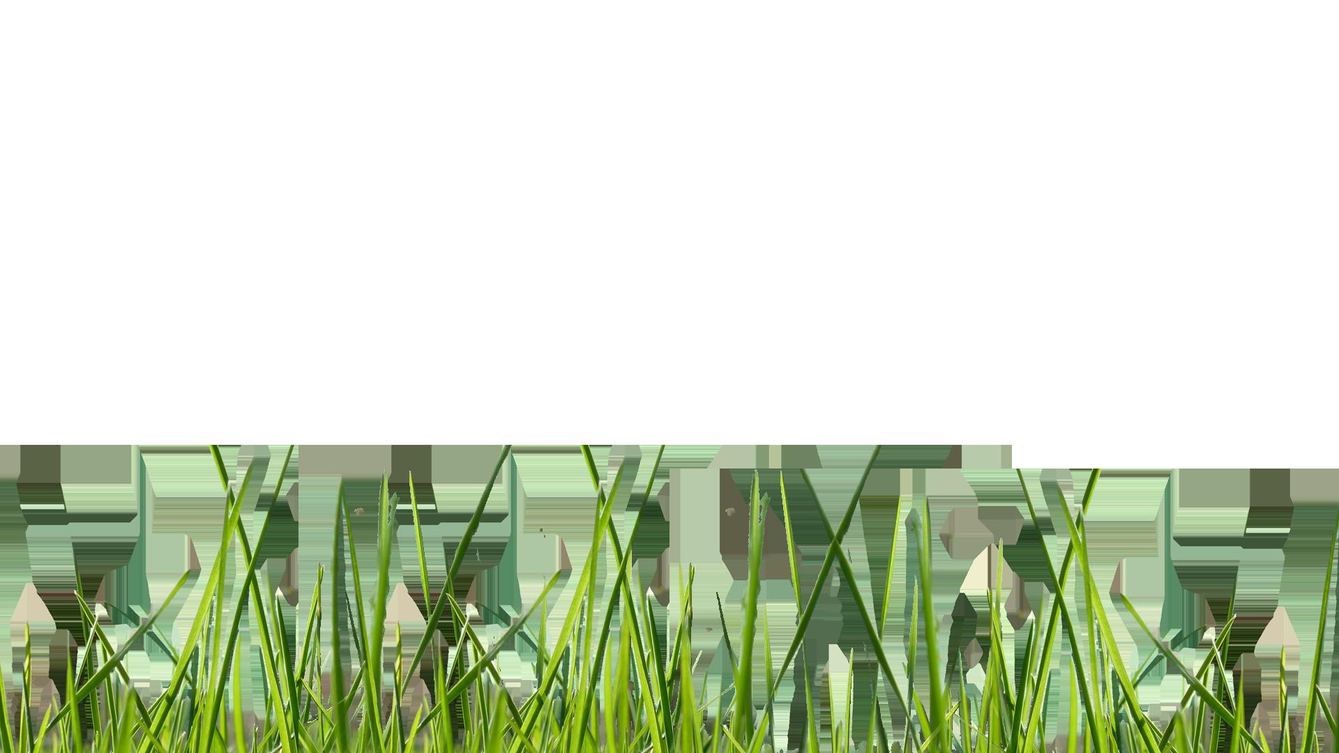 Jardinier paysagiste avignon lagage et abattage d for Elagage entretien jardin