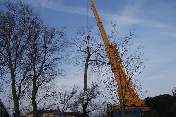 Elagage vaucluse 84 elagage abattage d 39 arbres avignon for Entretien jardin vaucluse